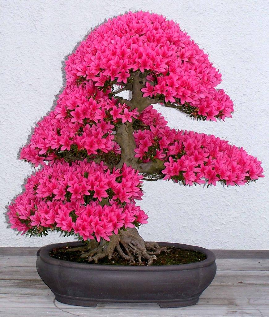 Pin фото цветущий бонсай бонсай из бисера on Pinterest.